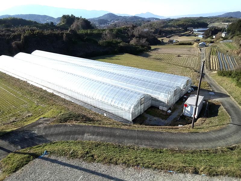 松原農園のイチゴハウス
