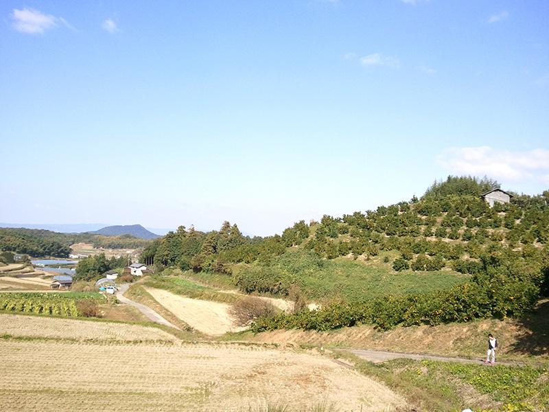 松原農園のみかん園からの風景