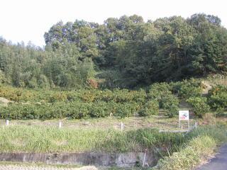 松原実農園の全景