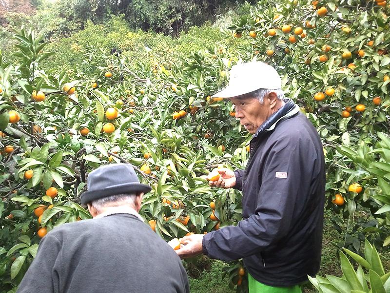 収穫法等の説明